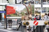 Ein Steinbock der RhB steht im Hauptbahnhof in Zürich (Nicola Pitaro)