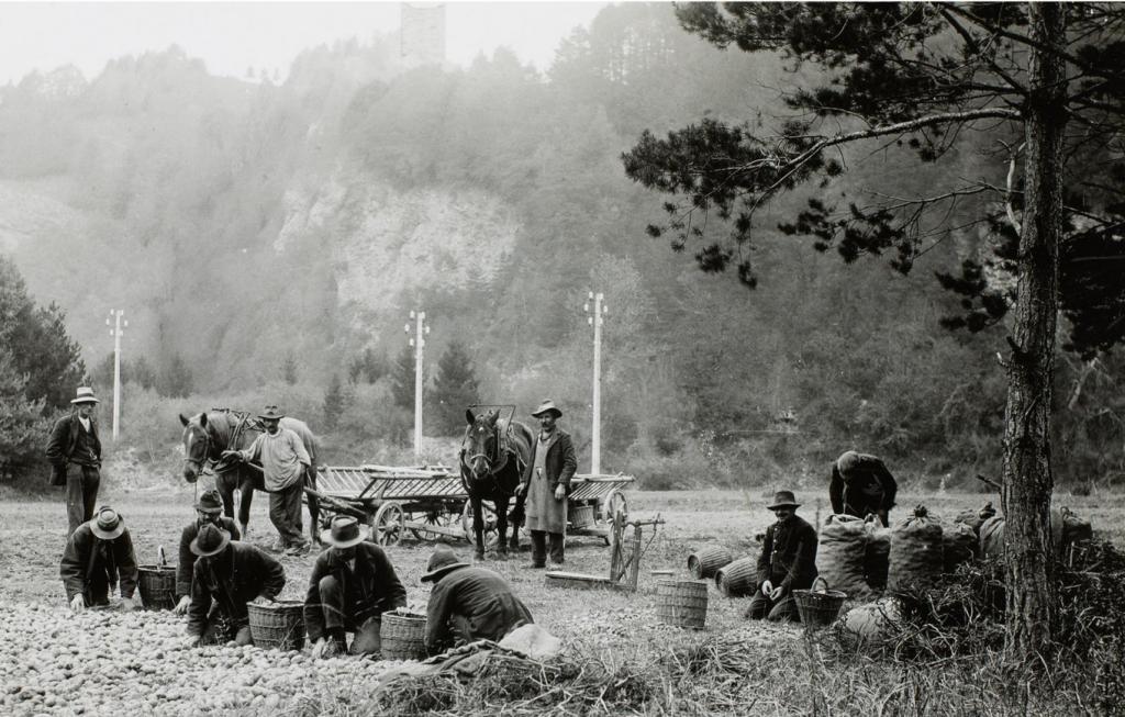 Insaßen der Arbeitsanstalt Realta in Cazis im Domleschg bei der Kartoffelernte (Staatsarchiv Graubünden)