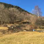 Brandfläche von mehreren Dutzend Quadratmetern nähe Wald (Foto: Kapo Graubünden)