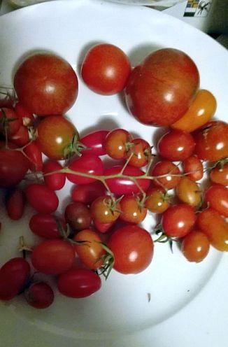 Die Leute sollen in Sagogn die Möglichkeit erhalten, selbst Gemüse anzubauen (Foto: Biofred.ch)